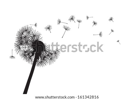 black dandelion loosing his integrity on wind - stock vector