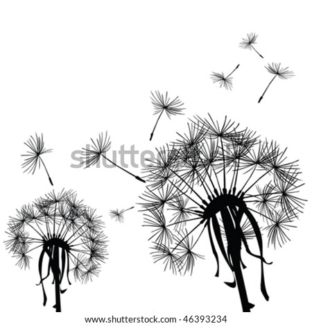 Black dandelions in the wind - stock vector