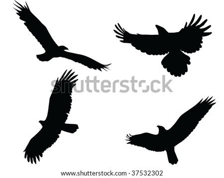 black eagle vector silhouette - stock vector