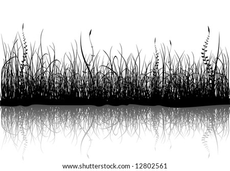 Black grass isolated on white - vector - stock vector