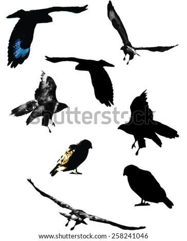 Black, grey-scale and coloured vectors showing a Buzzard in flight and sat on top of a surface. - stock vector