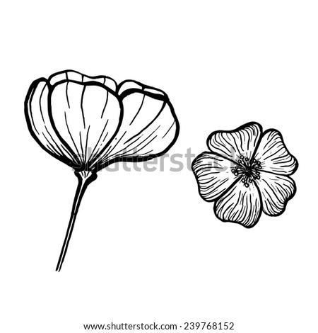 Black ink image of two flowers on white background - stock vector