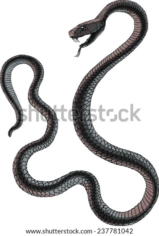Black mamba uncoiled, head in a three quarter view, teeth bared, ready to strike.