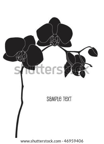 Orchid Phalaenopsis Stock Images, Royalty-Free Images ...