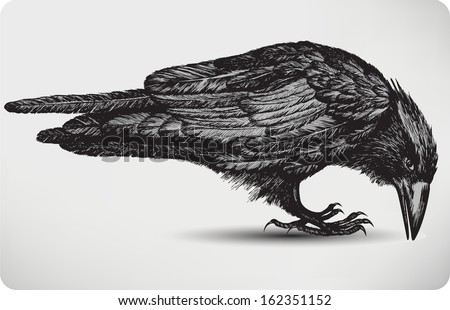 Black raven bird, hand-drawing. Vector illustration. - stock vector