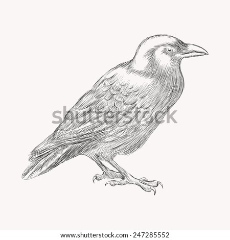 Black raven bird. Hand drawn vector illustration.  Doodle shading - stock vector