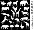 Black set silhouettes  zoo animals collection on white background. Vector illustration. - stock vector