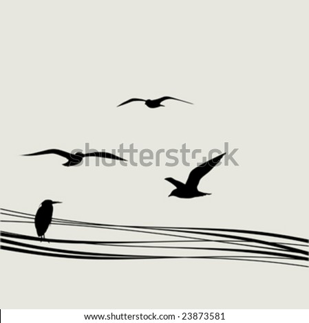 black silhouette bird on electrical wire - stock vector