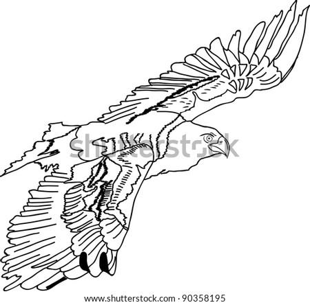 eagle isolated on white background black stock vector 105574541 shutterstock. Black Bedroom Furniture Sets. Home Design Ideas