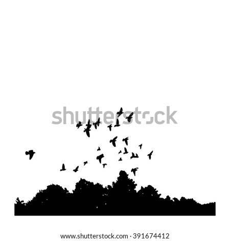 black silhouettes of a flock of doves (Columba livia) flying over the trees on a white background. - stock vector