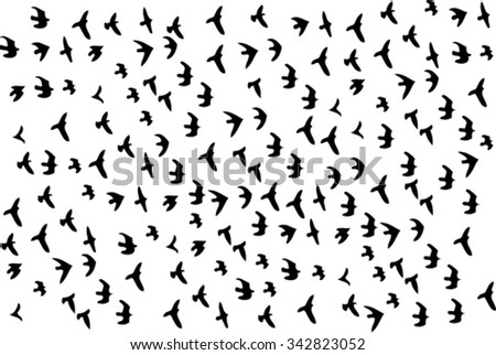 Black silhouettes of birds  - stock vector