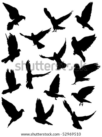 Black silhouettes of pigeon.  vector illustration - stock vector