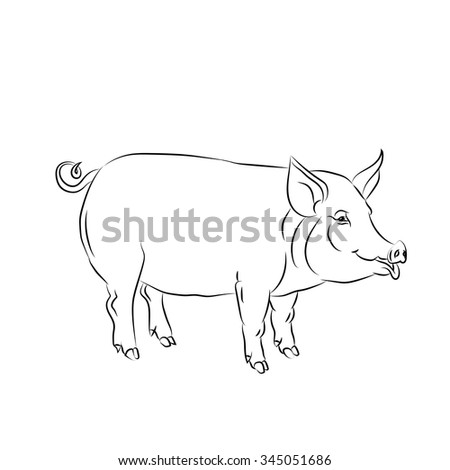 Black sketch drawing of a pig is on white background. Vector illustration. - stock vector