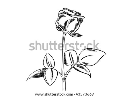 Black sketch of rose on white background.