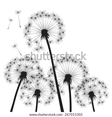 Black vector dandelions - stock vector