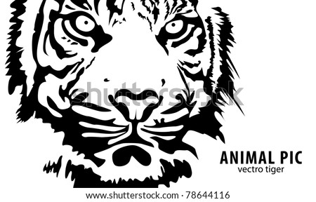 black vector tiger on white background - stock vector