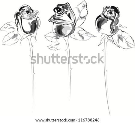 Black white long stem roses vector watercolor sketch - stock vector