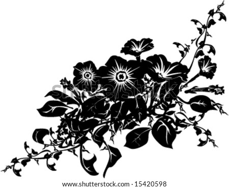 black white morning glory bouquet vector illustration
