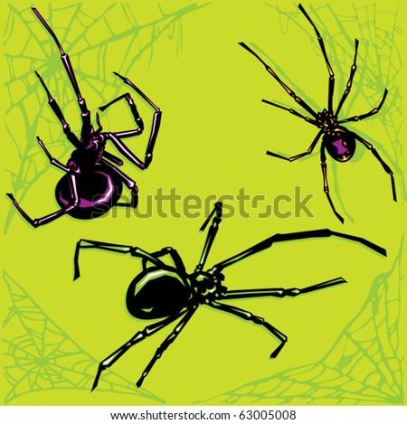 Black Widow Spiders - stock vector