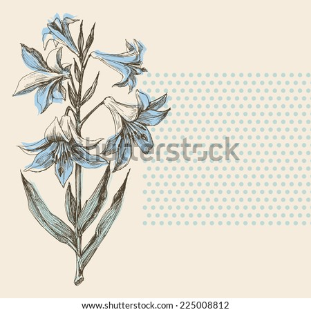 Blooming lily flower greeting card or wedding invitation design element - stock vector