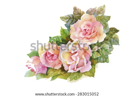 Blooming Pink Rose flowers, watercolor vector illustration