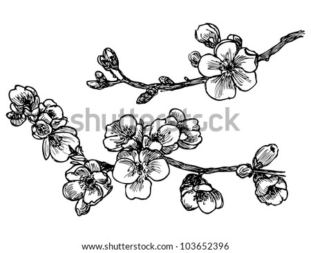 Blooming tree sketch in vector - stock vector