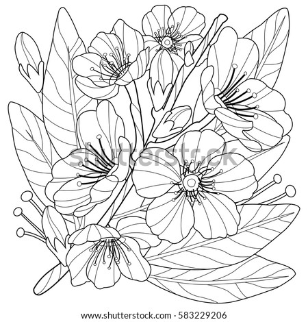blossoming almond tree branch with flowers coloring book page - Flowers Coloring Book