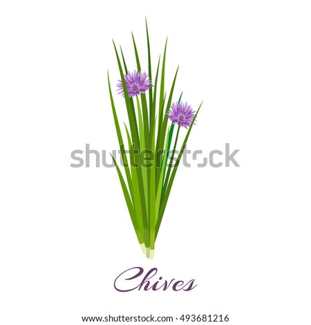 Chives Clip Art Illustration Free