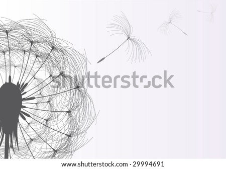 Blow Dandelion On Gray Background - stock vector