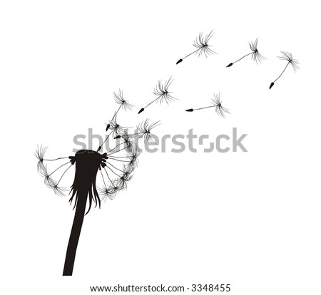Blow Dandelion.  See more vector dandelions in my portfolio - stock vector