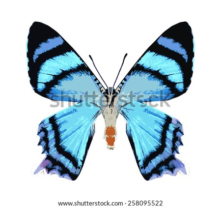 Blue butterfly , isolated on white - stock vector