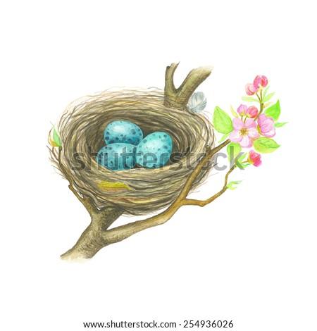 Blue eggs in nest Song Thrush, watercolor vector illustration. - stock vector