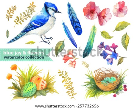 Blue jay and flowers collection for beautiful design - stock vector