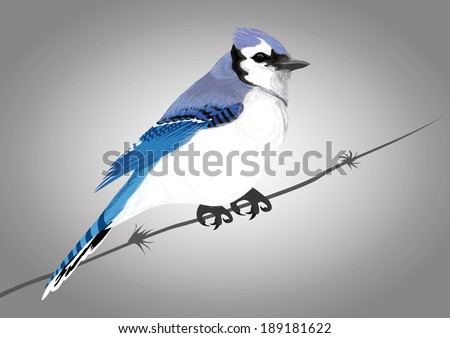 Blue Jay - birds Vector illustration of two blue birds with winter background - stock vector