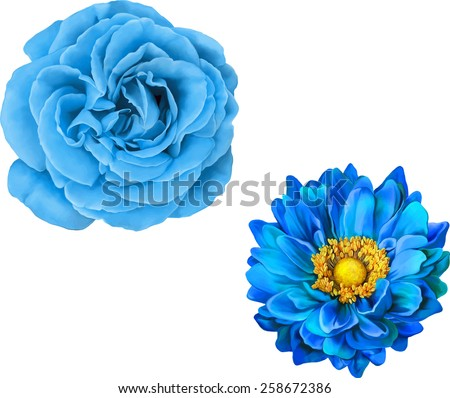 Blue rose and Mona Lisa flower, Blue flower, Spring flower.Isolated on white background. - stock vector