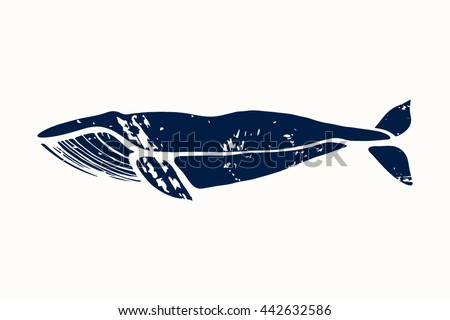 Blue whale. Balaenoptera musculus. Whale isolated on a light background. Logo for your design. Ink. Hand drawn. - stock vector
