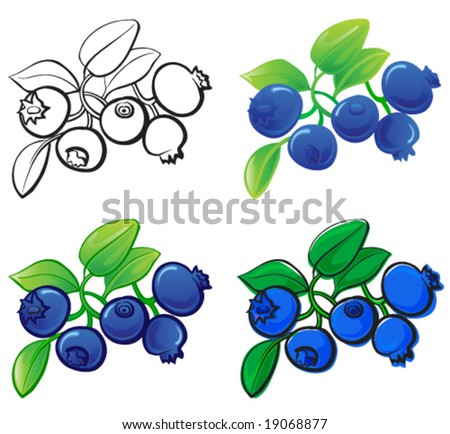 Blueberry - stock vector