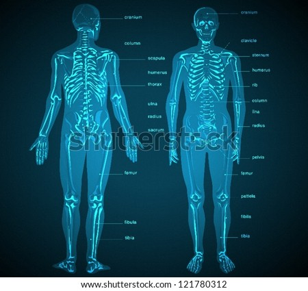 Blueprint with x-ray - stock vector
