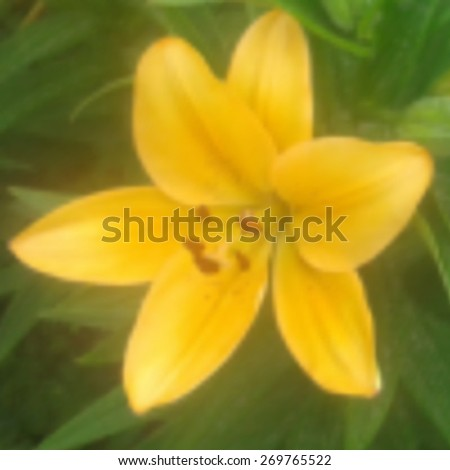 Blur abstract background. Blurred image beautiful flower. - stock vector