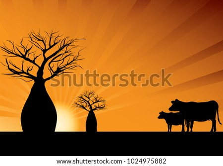 Boab trees and two cows with orange rays in background