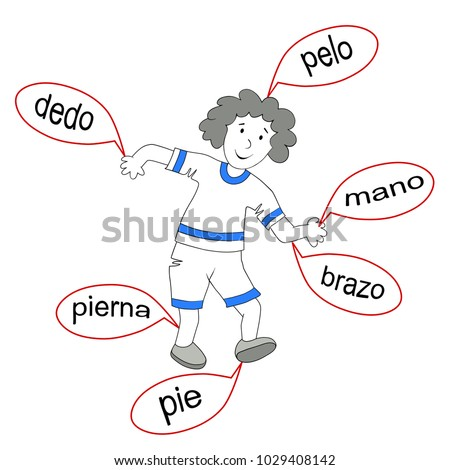 Body Parts Spanish Drawing Boy Basic Stock Vector 1029408142 ...