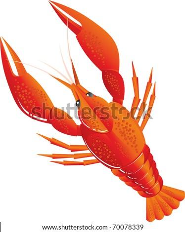 Boiled crawfish - stock vector