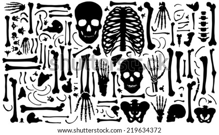 bone silhouettes on the white background - stock vector