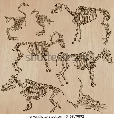 Bones, Skeletons and Skulls of some DOMESTIC (FARM) ANIMALS. Collection of an hand drawn vector illustrations. Freehand sketching. Each drawing comprise a few layers of lines. Background is isolated. - stock vector