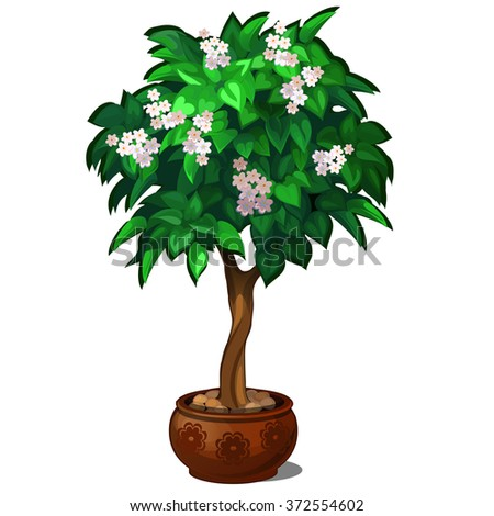 Bonsai with white flowers. Vector.