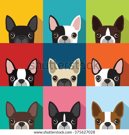 Boston Terrier Patternvector Full Color