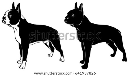 boston terrier outline terrier stock images royalty free images vectors 3453
