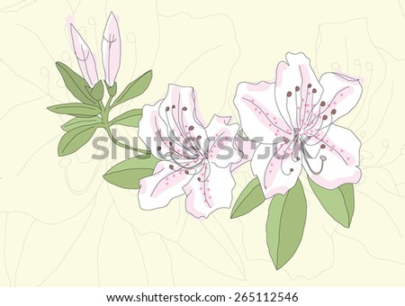 Botanical illustration of azalea (rhododendron) flowers with buds