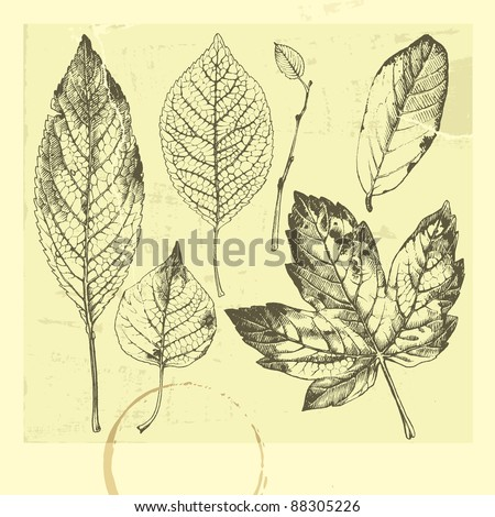 Botanical set: vintage highly detailed hand drawn leaves. - stock vector