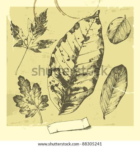 Botanical set: vintage highly detailed hand drawn leaves. - stock vector
